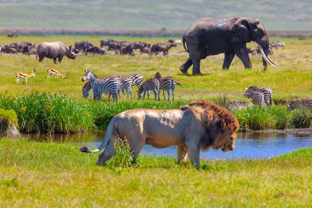 Op vakantie naar Tanzania in 2021? Belangrijke tips…